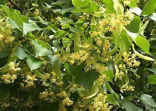 Bitkilerin cilde etkileri