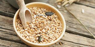 Buğday ruşeymi yağı nedir nelere faydalıdır